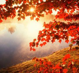 autumn-leaves-wallpaper-6